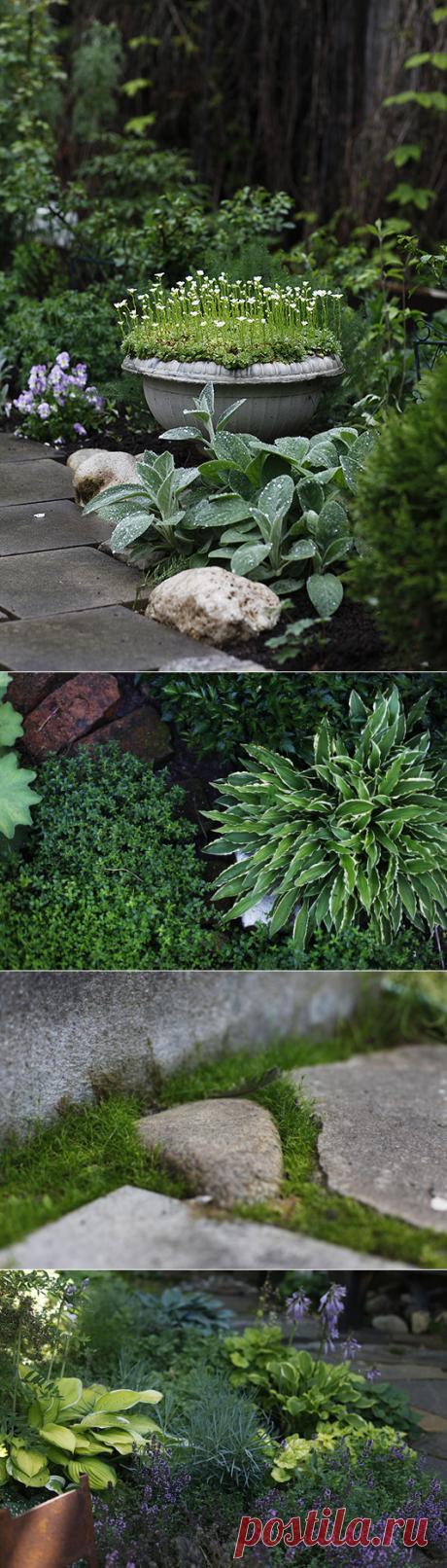 Почвопокровные для солнечных мест - Home and Garden