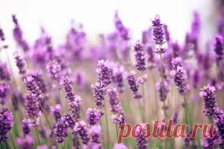 9 ароматов для снятия стресса и релаксации | Журнал Домашний очаг