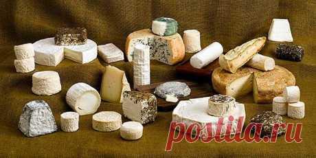 Краткое описание приготовления некоторых сортов козьего сыра, не требующих особенных приспособлений.  1. Солотурнский швейцарский сычужный сыр изготавливают весьма просто, и несложное производство его доступно каждому. 15 л молока вливают в котел, нагревают над огнем до 40°, затем в молоко кладут сычужный фермент, который производит быстрое свертывание (на 15 л молока приблизительно 25 г закваски). Полученное кальё разрезают, а сгустки творога отделяют от сыворотки, кладут...