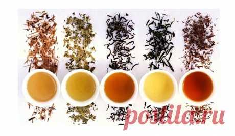 12 ценных чаев: бесценная памятка на все случаи