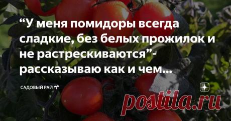 """""""У меня помидоры всегда сладкие, без белых прожилок и не растрескиваются""""- рассказываю как и чем удобрять, и другие секреты"""