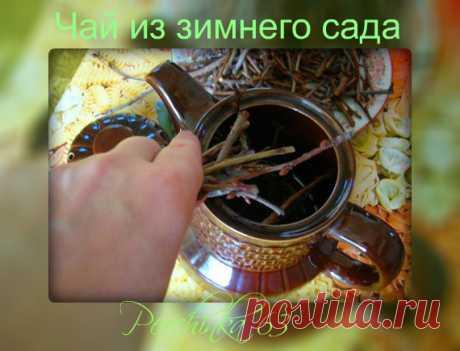 Fragrant tea from a winter garden - Perchinka63