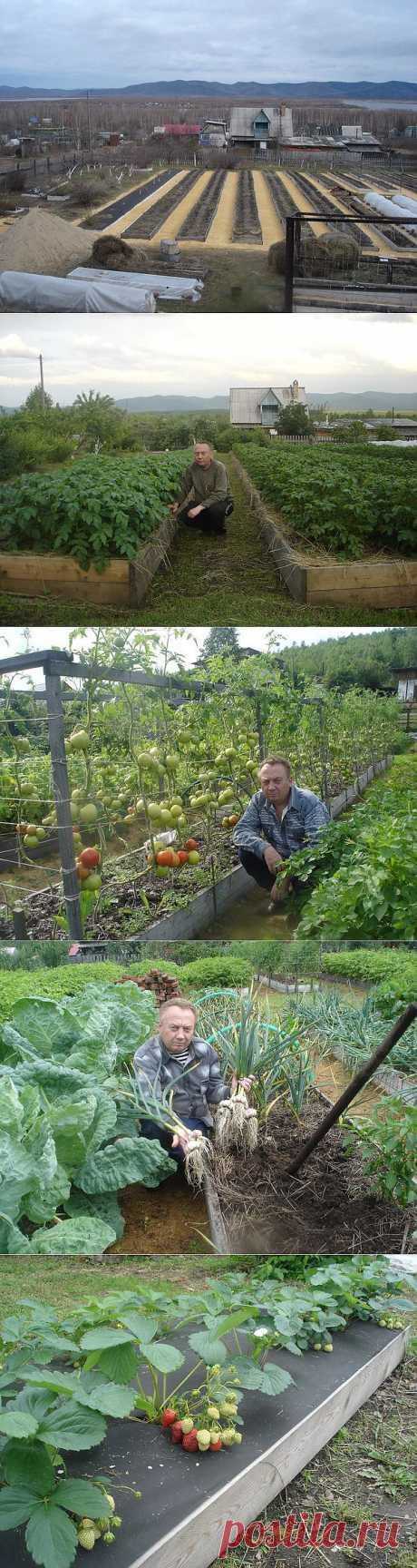 Удивительный огород Игоря Лядова.