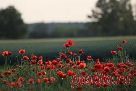 К чему снятся красные цветы во сне   Сонник-снов