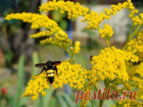 Как черные осы сколии помогли нам в борьбе против личинок вредителей