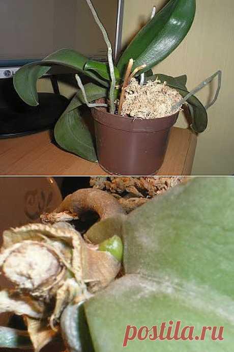 """""""Омоложение"""" орхидеи. Продолжение."""