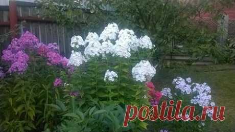 (117) МОЯ ДАЧА дизайн, огород, сад, цветы, идеи, советы, дачники и дачная жизнь