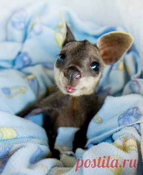 15малышей животных, которые растопят даже самые холодные сердца