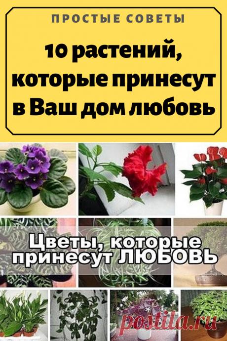 """10 растений, которые принесут в Ваш дом любовь. Антуриум (""""Мужское счастье""""). Это растение приносит счастье и успех в любви, а мужчинам — """"мужскую силу""""."""