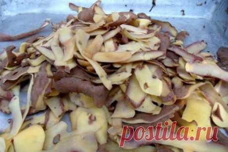 Поливаем картофельным отваром - получаем крепкую рассаду