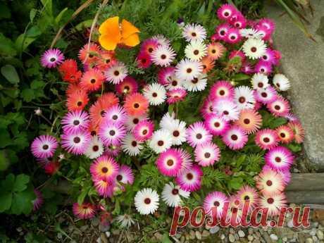 Цветет все лето без полива: пора посеять на рассаду! | Что посадить? | Яндекс Дзен