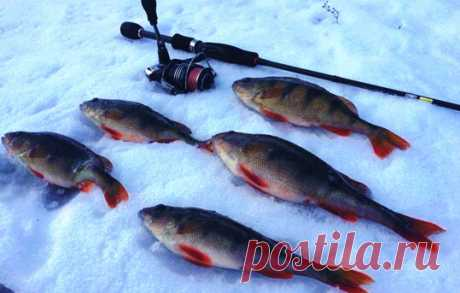 Зимний спиннинг: наживки для ловли со льда и нюансы, которые полезно знать | Хорошая рыбалка | Яндекс Дзен