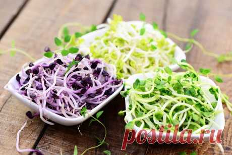 Прочитайте: Что нужно знать о микрозелени — ростках, которые добавляют в салаты и супы — советы в Журнале Маркета