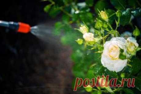 Стимуляторы цветения и плодоношения: обзор препаратов для пышного цветения и высокого урожая Многие садоводы относятся к стимуляторам цветения и плодоношения настороженно, полагая, что растения сами лучше знают, когда и что делать. Но, если разобраться, эти препараты совсем неплохи и изрядно ...