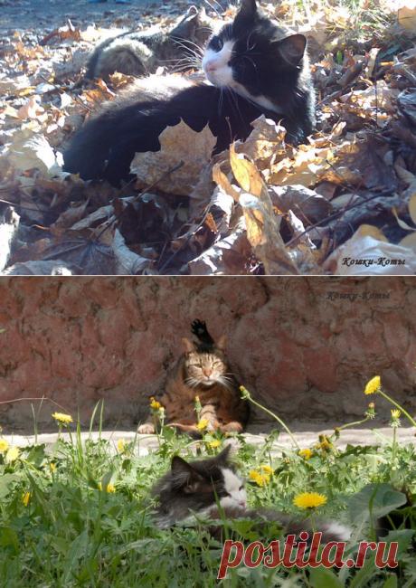 Эпизоды из жизни городских котов (№ 04, 05, 06) | Кошки & Коты | Яндекс Дзен  Три новых эпизода из жизни котов.  Эпизод 4. Кот в поиске, или о вкусах не спорят. 🐱  Эпизод 5. Последнее тепло осеннего солнца. 😾  Эпизод 6. Вот как я умею! 😺  Городские коты любят природу. Весной котов очень радует молодая трава. Они даже попробуют ее на вкус. Хотя какой там вкус? Есть вещи и повкуснее травы. А вот полежать, отдохнуть среди травы и цветов для котов самое то. А осенью в ясные дни...