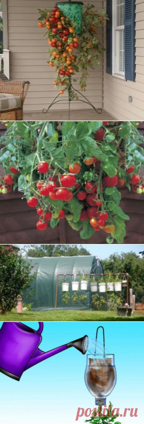 Выращивание помидор вниз головой: особенности технологии, преимущества, варианты посадки, правила ухода, советы, видео