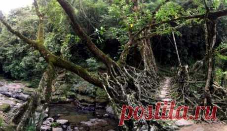 Угрожающие и экстремальные мосты / Туристический спутник