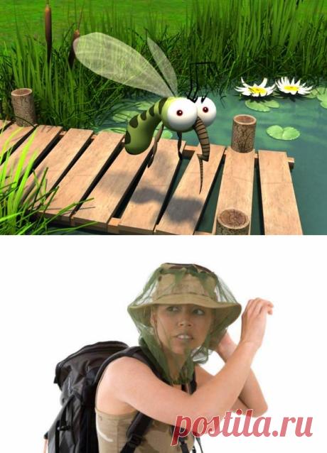 Комары на участке: средство для улицы, защита дачного периметра, борьба с комарами на даче, как избавиться