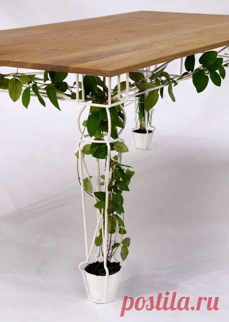 27 вариантов размещения комнатных растений – his.ua