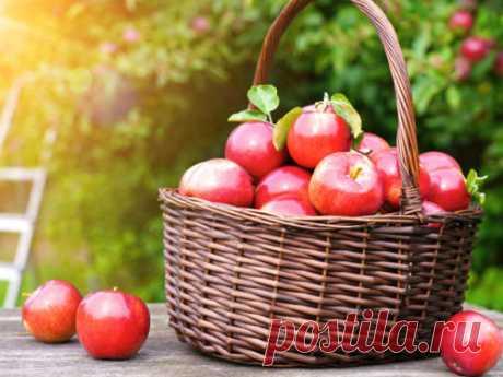 Яблочный Спас в2020году: что можно ичто нельзя делать вэтот день Яблочный спас— большой народно-церковный праздник, который всегда отмечается всередине августа. Очень важно помнить отом, что можно ичто нельзя делать вэтот особенный день календаря.