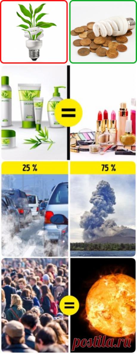 9 мифов об экологии, в которые мы верим со школы (Сбор макулатуры не уменьшит вырубку леса)
