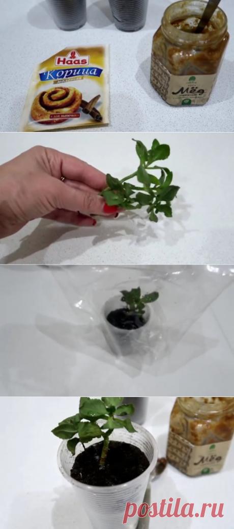 Этот способ укоренения растений действует даже там, где другие бессильны — Копилочка полезных советов