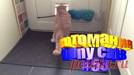коты смешные видео, смешные видео котов, видео котов смешное, кот видео смешное, видео для котов, для котов видео, коты приколы видео, для кота видео, видео кота, видео смешные животные, животные смешное видео, смешное видео животные, животные смешно, смешных животных, приколы коты, прикол с котами, прикол коты, смешные коты, видео смешные кошки, кошка смешная, смешное кошки, смешных кошек, кошка видео смешное, смешно кошка, про смешно кошек, смешные кошка, видео про кошек, про кошку видео