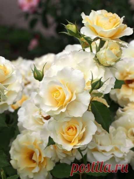 Счастлив тот, кто может разглядеть красоту в обычных вещах, там, где другие ничего не видят.  Камиль Писсарро