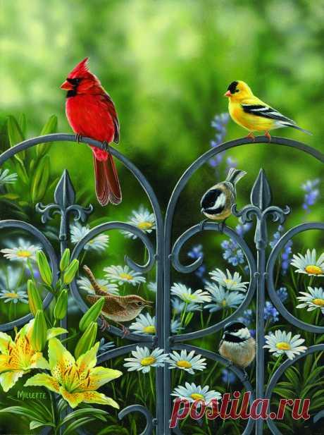 Пташий мир...весна-лето   Rosemary Millette (часть 3.)