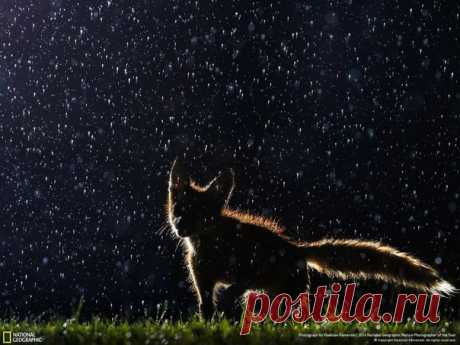 «Танцующий под дождём». Автор фото — Vladislav Kamenski, участник фотоконкурса «Nature Photographer of the Year»: