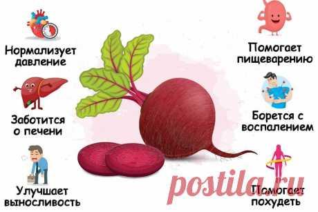 Свекла: польза, вред и как ее правильно готовить | Fresh.ru домашние рецепты | Яндекс Дзен