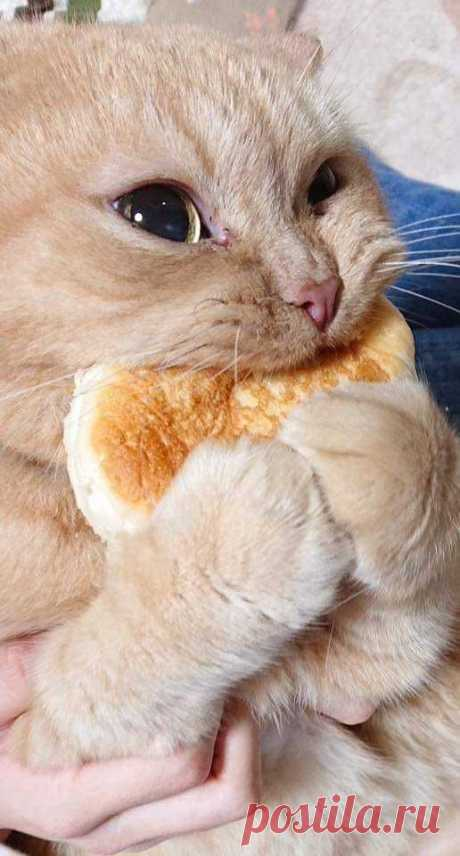 However, you need to be careful and check out the ingredients in any bread you're considering giving to your cat. Breads that include garlic, onions, or raisins are definitely not suitable for cats.