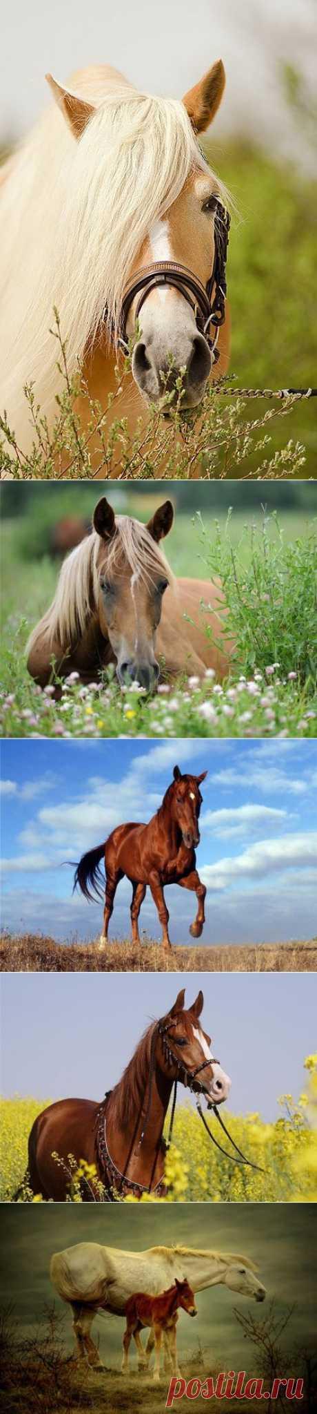 Лошадки...