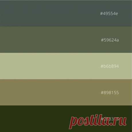 Палитра цветов: серый, оливковый и зеленый. Фотография и палитра с кодами, которую можно скачать. #цветоваяпалитра #палитрацветов #кодцвета #природнаяпалитра #naturepalette #colorcode #colorpalette
