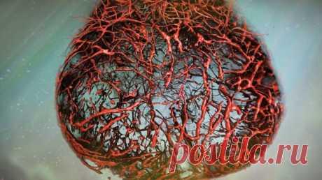 Ученые вырастили в лаборатори идеальные человеческие кровеносные сосуды | Наука и жизнь