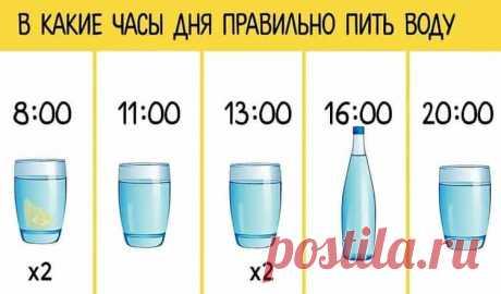 График для худеющих: ешь что хочешь и пей воду по часам.#здоровье #красота #dlyadushy #полезныесоветы