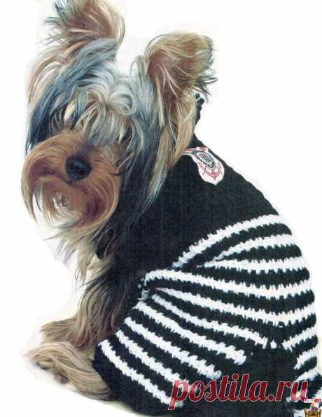 La ropa exclusiva para los perros - el mono para yorka - Puramente el GATO