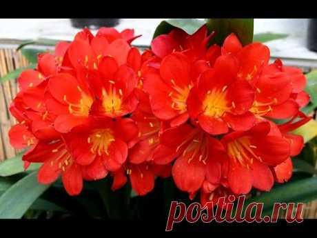 Чудодейственная подкормка для цветов — Калейдоскоп чудес