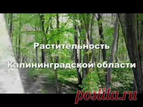 Растительность Калининградской области - YouTube