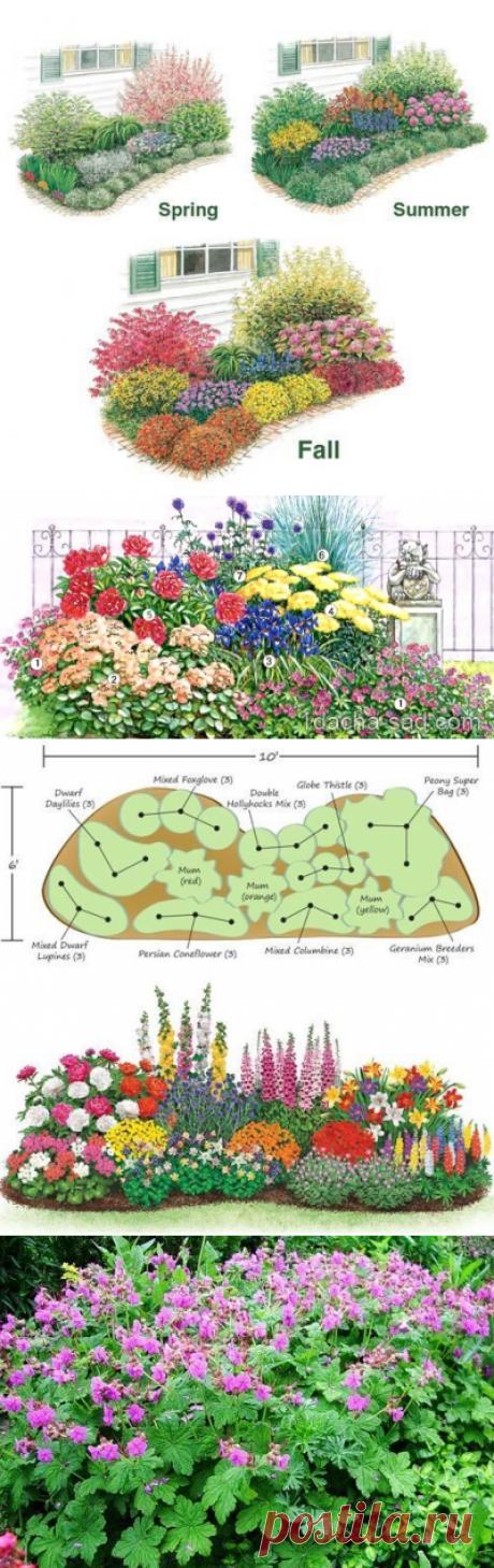 Схема клумбы непрерывного цветения с геранью, ирисом и пионом | Мои Идеи Для Дачи и Сада