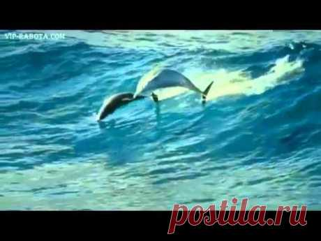 Шикарный релакс! Дельфины + шикарная музыка!