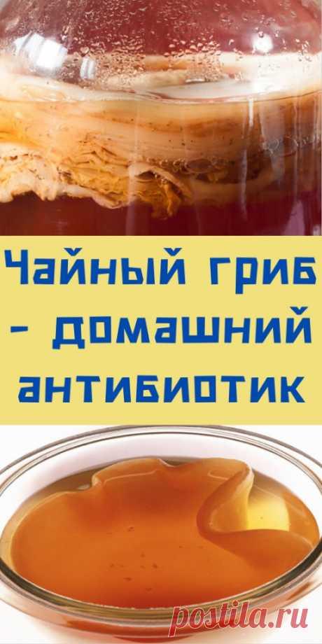 Чайный гриб - домашний антибиотик - likemi.ru