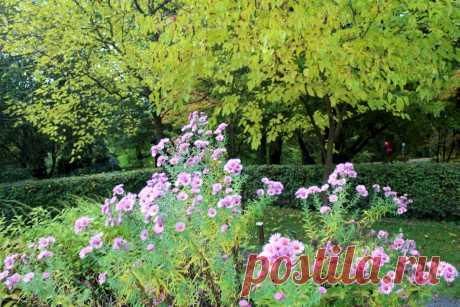 Ботанический сад. Мои фото
