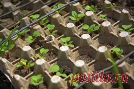 Применение яичных лотков в саду и огороде: ТОП-15 полезных идей