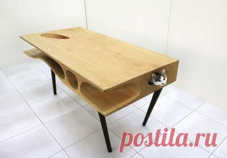 Рай для кошек ирабочий стол