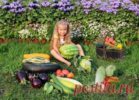 Полезные растения на страже вашего урожая