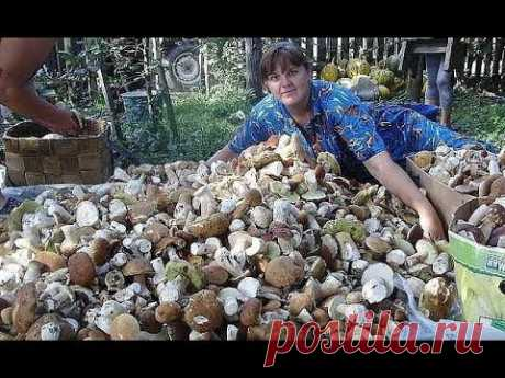 How to grow up many cepes on the site (October)
