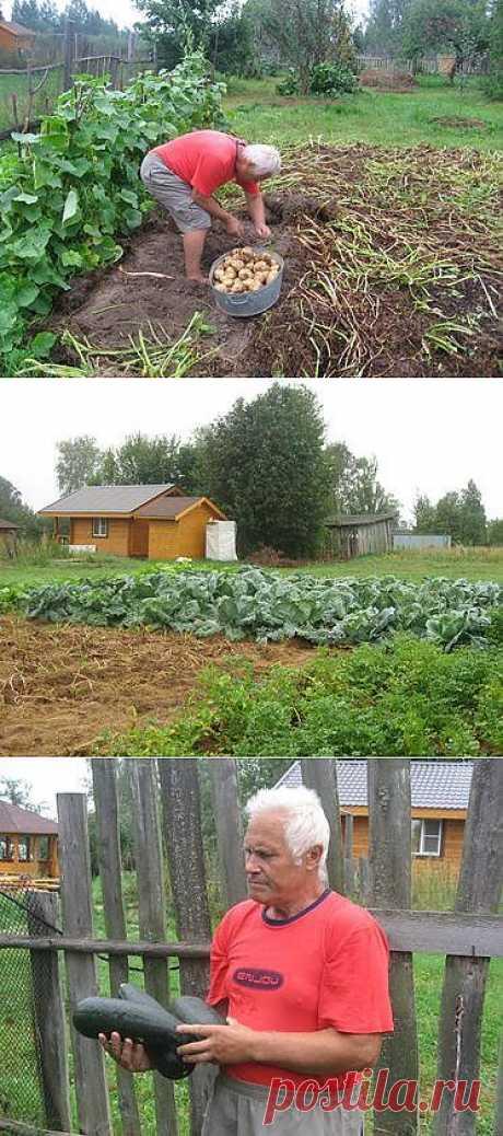 Удивительный огород.