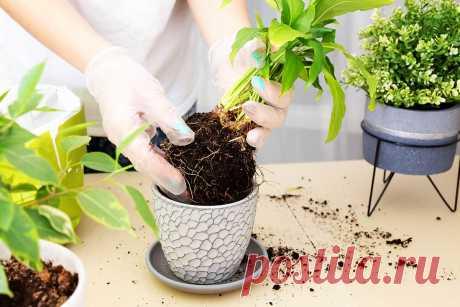 Change of houseplants