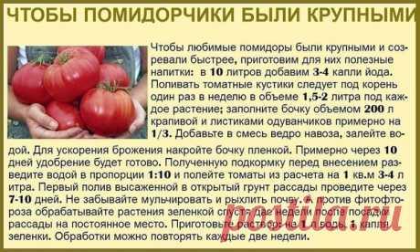 Дачный лайфхак  Советы дачницы в копилочку полезностей